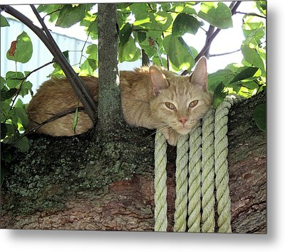 Metal Print featuring the photograph Catnap Time by Thomas Woolworth