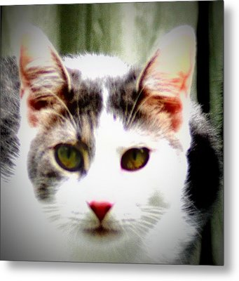 Cats Meow Metal Print by Bill Cannon