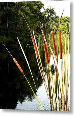 Cattails On The River Bank Metal Print