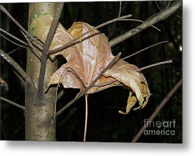 Caught In Fall Metal Print by Laurel Thomson