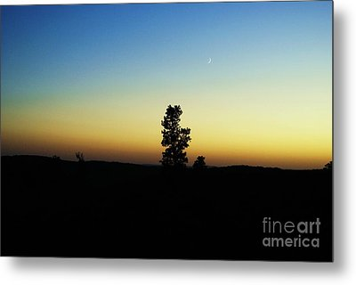 Metal Print featuring the photograph Chasing The Sun by Julie Clements