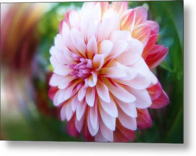 Chrysanthemum Revelation Metal Print
