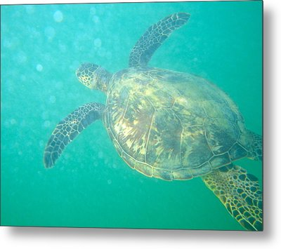 Clyde The Sea Turtle Metal Print by Erika Swartzkopf