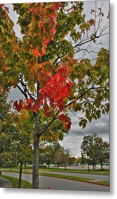 Metal Print featuring the photograph Cold Autumn Breeze  by Michael Frank Jr