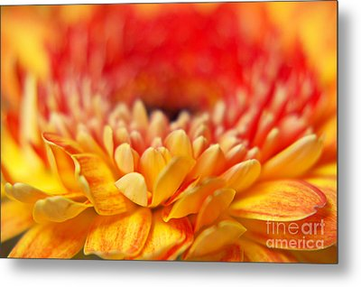 Color Of Summer II Metal Print by Angela Doelling AD DESIGN Photo and PhotoArt