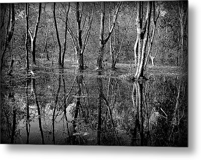Colorless Serenity Metal Print by Greg Palmer