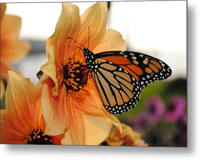 Metal Print featuring the photograph Colors In Sync by Michael Frank Jr