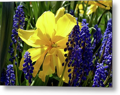 Metal Print featuring the photograph Colors Of Spring by Pravine Chester