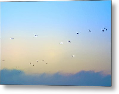 Come Fly With Me Metal Print by Bill Cannon