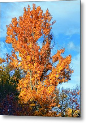 Complimentary Colors Metal Print by Michael Putnam