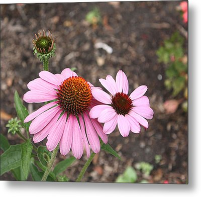 Coneflowers Nb Metal Print by Susan Alvaro