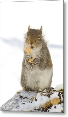 Cookie Squirrel Metal Print