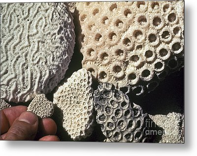 Coral Cobbles On Beach Of Bonaire Metal Print by Greg Dimijian