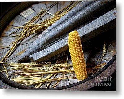 Corn Cob Metal Print by Carlos Caetano