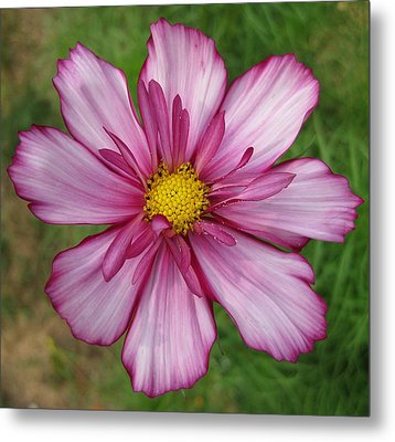 Cosmic Cosmo Metal Print by Judy Via-Wolff