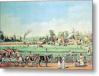 Cotton Plantation On The Mississippi Metal Print by Photo Researchers