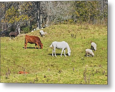 Cow Horse Sheep Grazing On Grass Farm Field Maine Metal Print by Keith Webber Jr