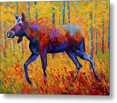 Cow Moose Metal Print