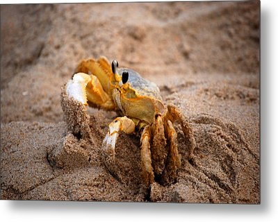 Metal Print featuring the photograph Crabby by Linda Mesibov