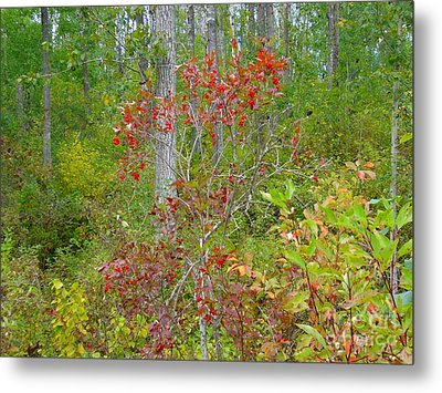 Metal Print featuring the photograph Cranberries With Early Autumn Colors by Jim Sauchyn