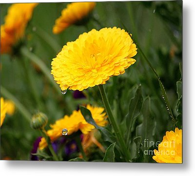Cup Floweth Over Metal Print by Erica Hanel