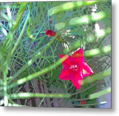 Cypress Vine With Foliage Metal Print by Padre Art