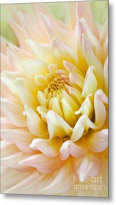 Dahlia Flower 03 Metal Print
