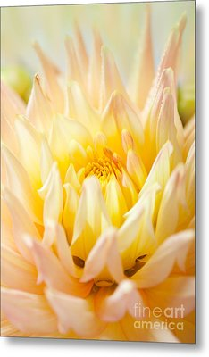 Dahlia Flower 10 Metal Print