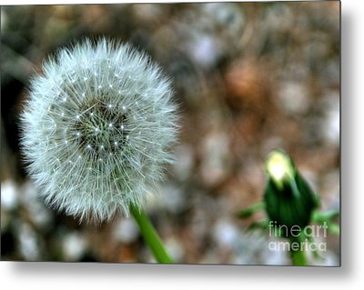 Metal Print featuring the photograph Dandelion by Adrian LaRoque