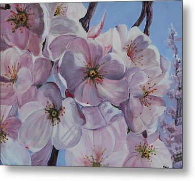 Dc Cherry Blossoms Metal Print