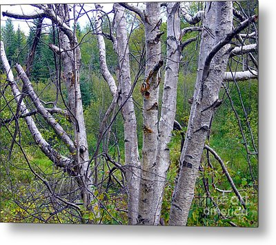 Metal Print featuring the photograph Dead Birch Tree by Jim Sauchyn