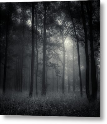 Deep Forest Metal Print by Jaromir Hron