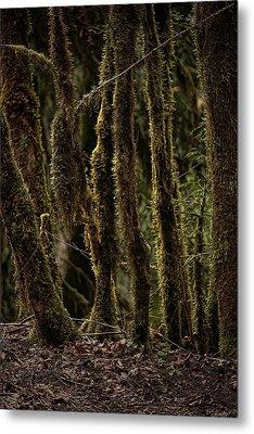 Deep Woods Metal Print by Bonnie Bruno