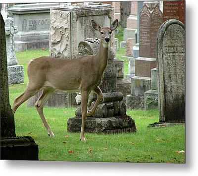 Deer Among The Headstones Metal Print by Bruce Ritchie