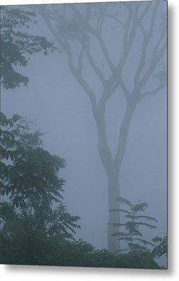 Delicate Trees Appear Out Of The Mist Metal Print by Mattias Klum