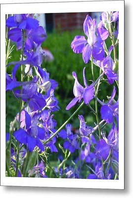 Metal Print featuring the photograph Delicately Blue by Frank Wickham