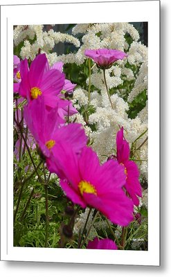 Metal Print featuring the photograph Descendingly Pink by Frank Wickham