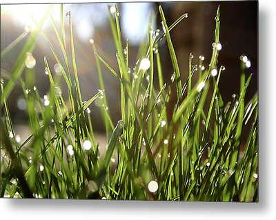 Metal Print featuring the photograph Dew by Emanuel Tanjala