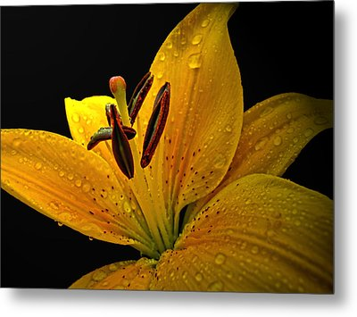 Metal Print featuring the photograph Dew On The Daylily by Debbie Portwood
