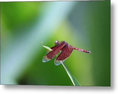 Dragonfly Metal Print by Gonca Yengin