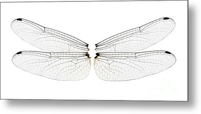 Dragonfly Wings Metal Print by Raul Gonzalez Perez