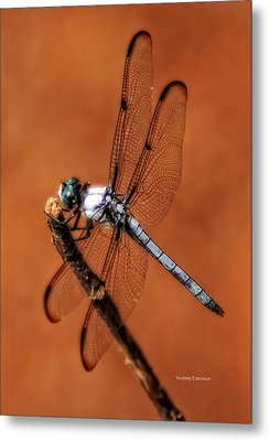 Metal Print featuring the photograph Dragonfly by Yvonne Emerson AKA RavenSoul