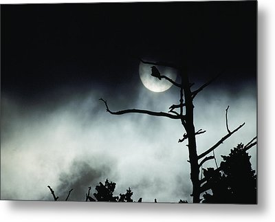 Dramatic Scene Of A Dead Tree Metal Print by Michael S. Quinton