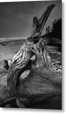 Driftwood On Beach Metal Print by Steven Ainsworth