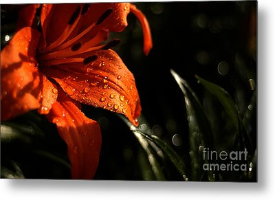 Droplets On Flower Metal Print by Vilas Malankar