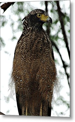 Metal Print featuring the photograph Eagle At Bharatpur by Pravine Chester