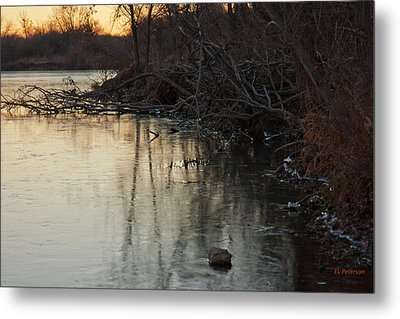 Early Morning Waterline Metal Print by Edward Peterson