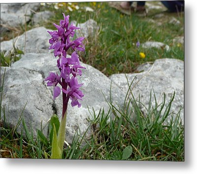 Metal Print featuring the photograph Early Purple Orchid by Rob Hemphill