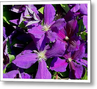 Metal Print featuring the photograph Elegant And Ready by Frank Wickham