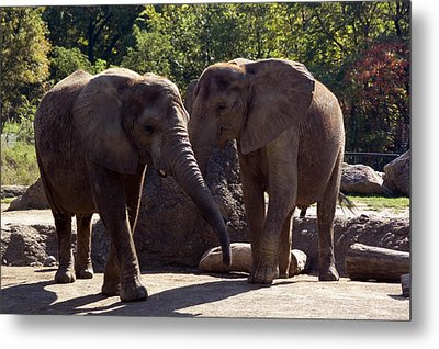 Elephants At The Pittsburgh Zoo Metal Print by Stacy Gold